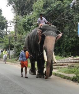 Elephant walk :)